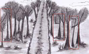 pistas2b-arbores